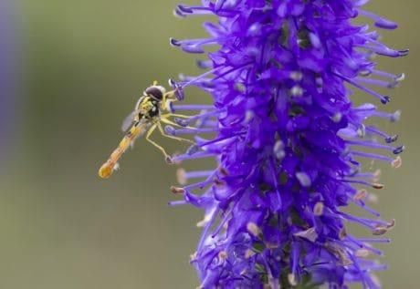 macro, natura, fiore, estate, erba, insetto, libellula