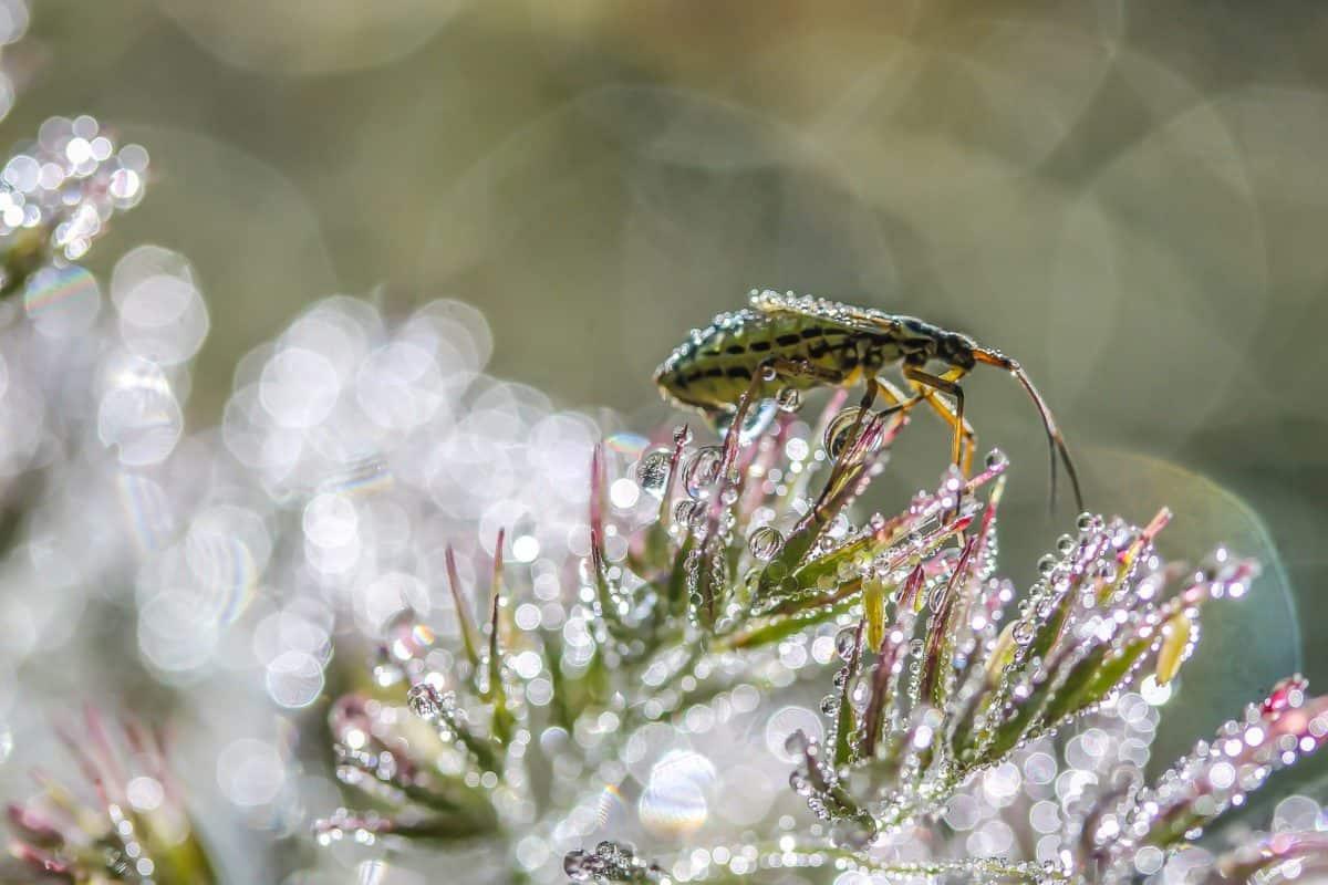 nature, flore, fleur, insecte, insecte, arthropode, rosée, l'humidité
