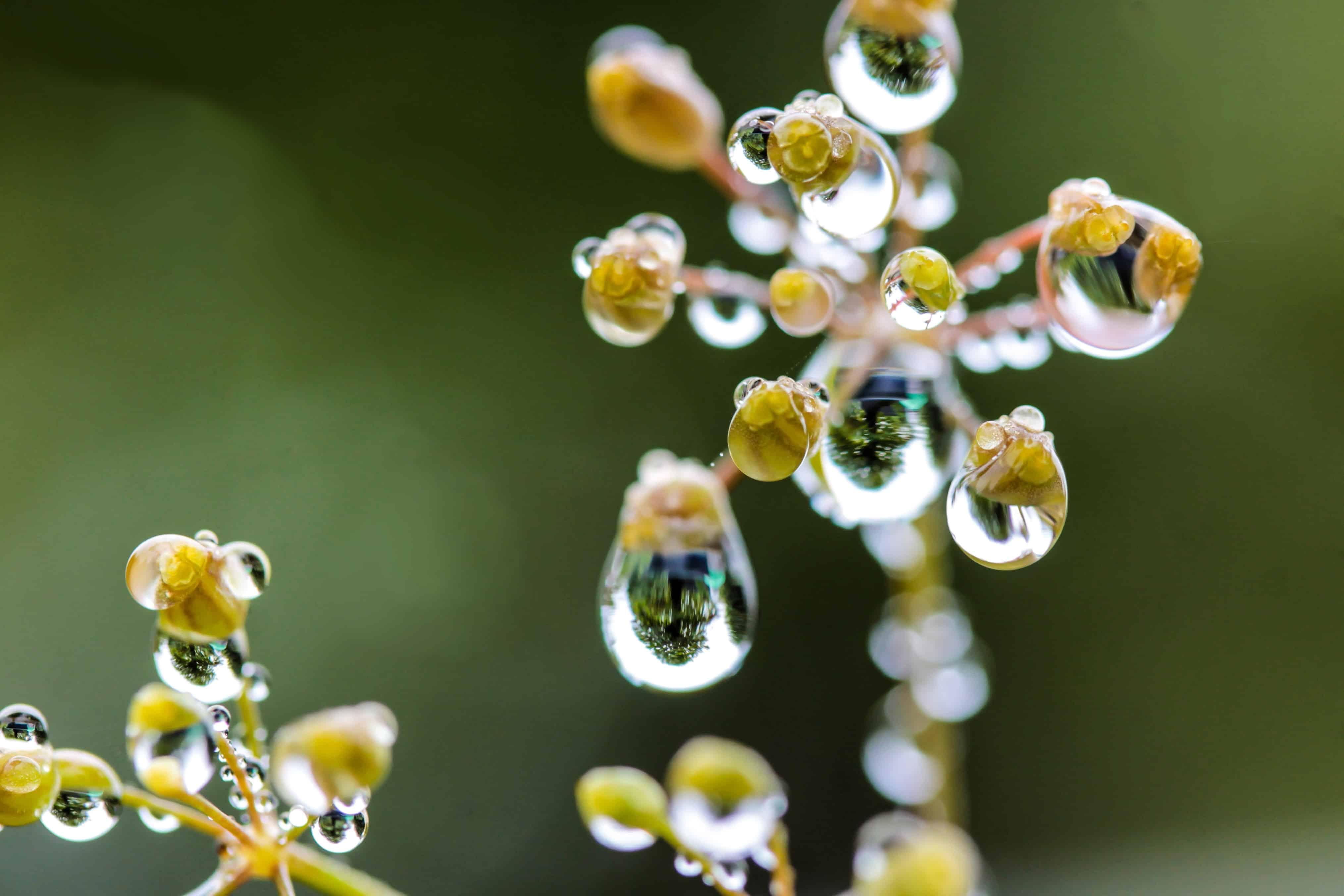 наперво, макро фото растений утру