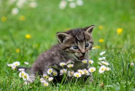 field, grass, cute, summer, nature, cat, outdoor, flower