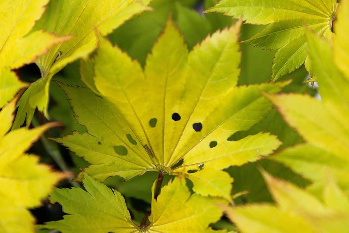 grünes Blatt, Makro, Natur, Flora, Pflanze, Baum, Herbst, Laub