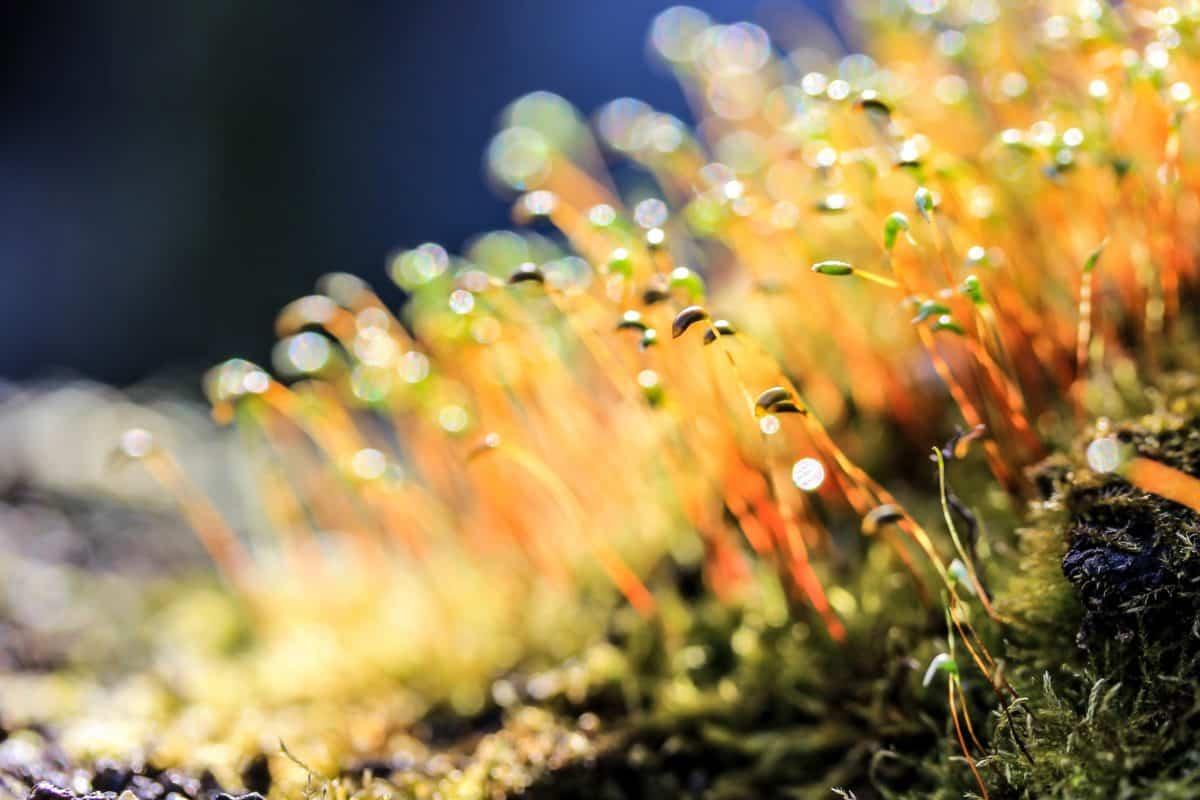 plante, macro, nature, flore, moss, macro, détail