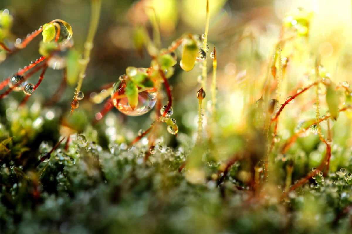 jardín, musgo, macro, Rocío, humedad, hoja, flora, naturaleza, hierba, planta