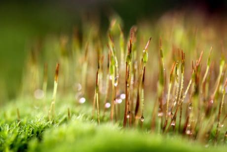 lawn, leaf, nature, moss, macro, dew, flora, grass, summer, field