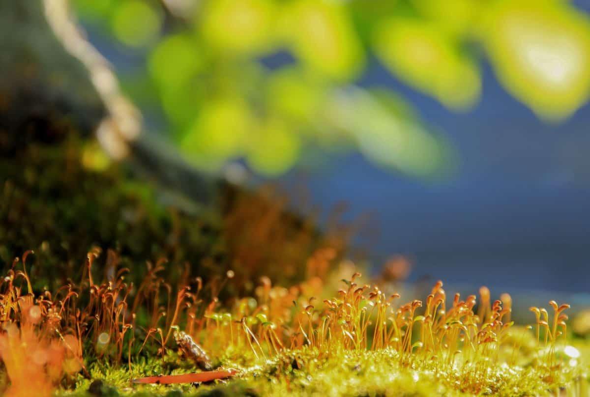自然、草、葉、太陽、植物、フィールド、植物、風景