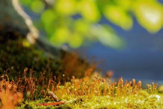 nature, grass, leaf, sunshine, flora, field, plant, landscape