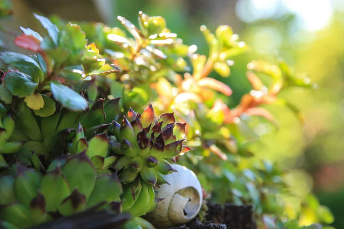 natura, verde foglia, flora, giardino, pianta, albero