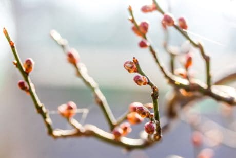 shrub, macro, flower, winter, branch, nature, tree