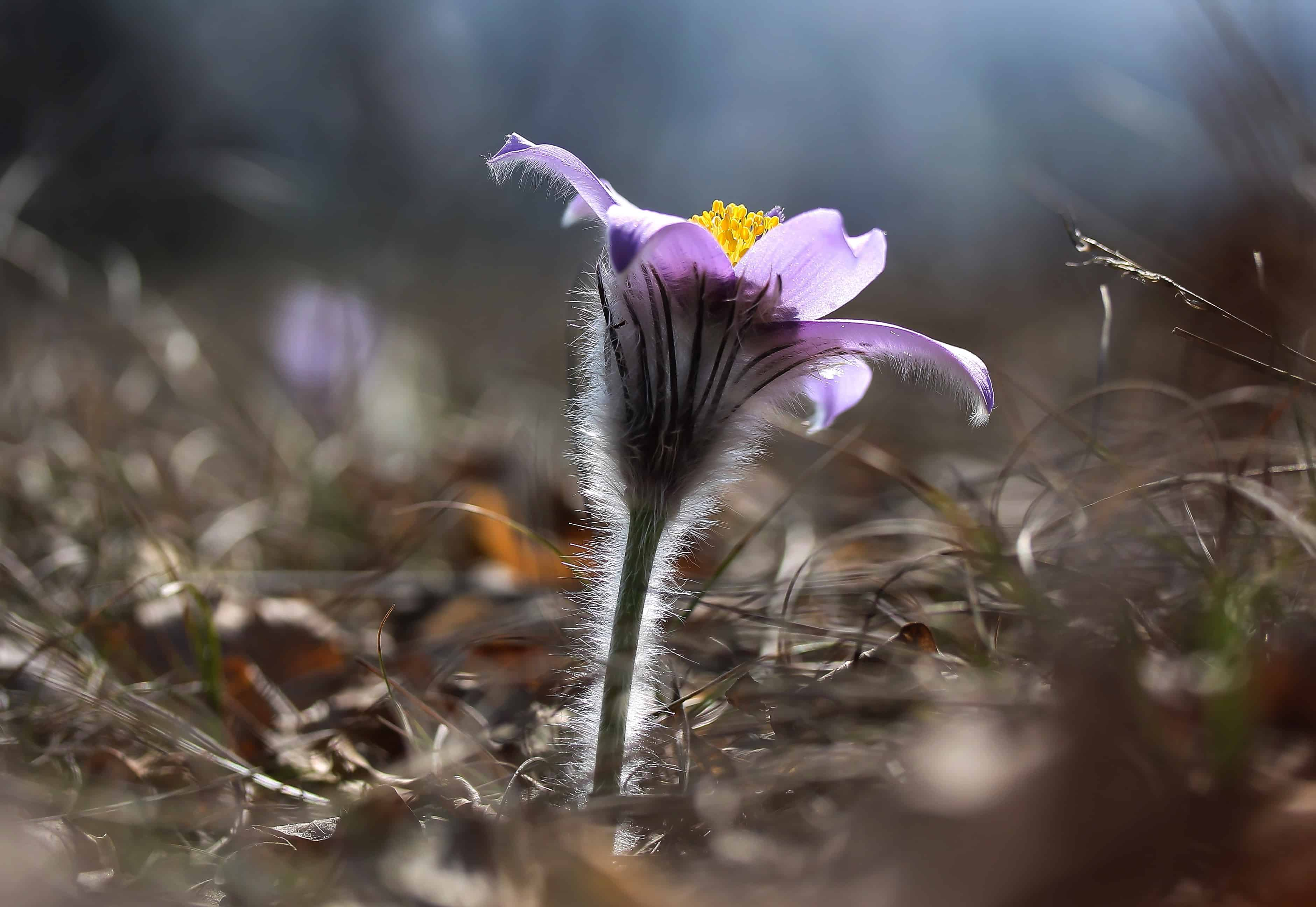 Free Picture Grass Wildflower Nature Plant Macro