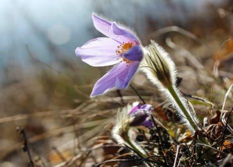Wildblumen, Makro, Tageslicht, Garten, Natur, Flora, Kraut, Pflanze, Blüte, Blütenblatt