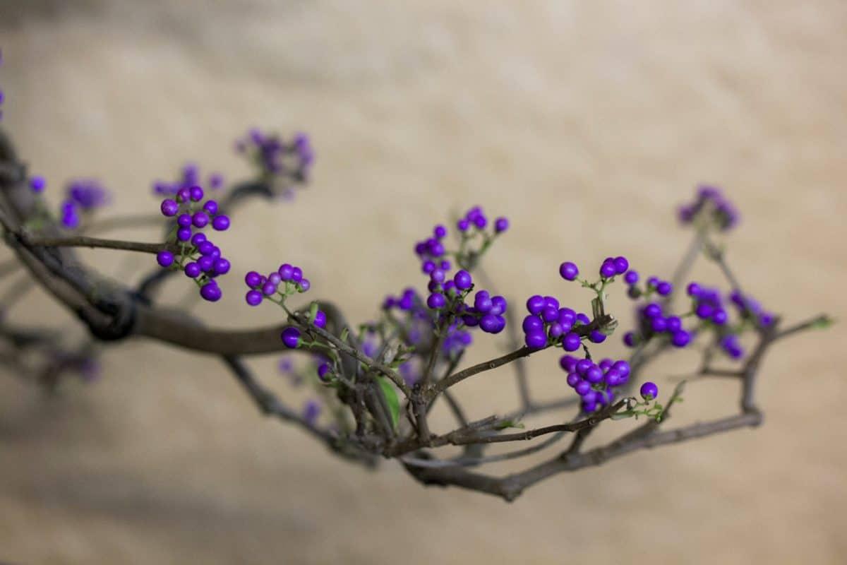arbuste, branche, fleur, nature, flore, herbe, plante, fleur, pétale