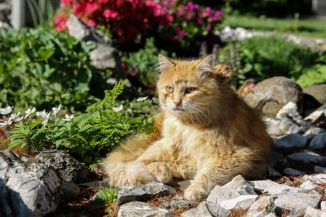 cat, nature, feline, kitten, fur, pet, kitty, cute, garden