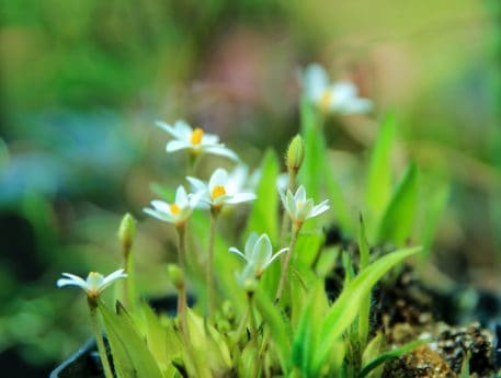 fleur sauvage, herbe, feuilles, nature, été, flore, jardin, plante