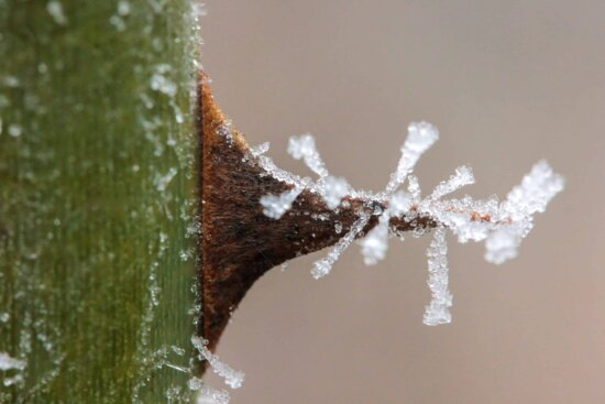 macro, snowflake, detail, winter, snow, frost, nature, thorn, plant