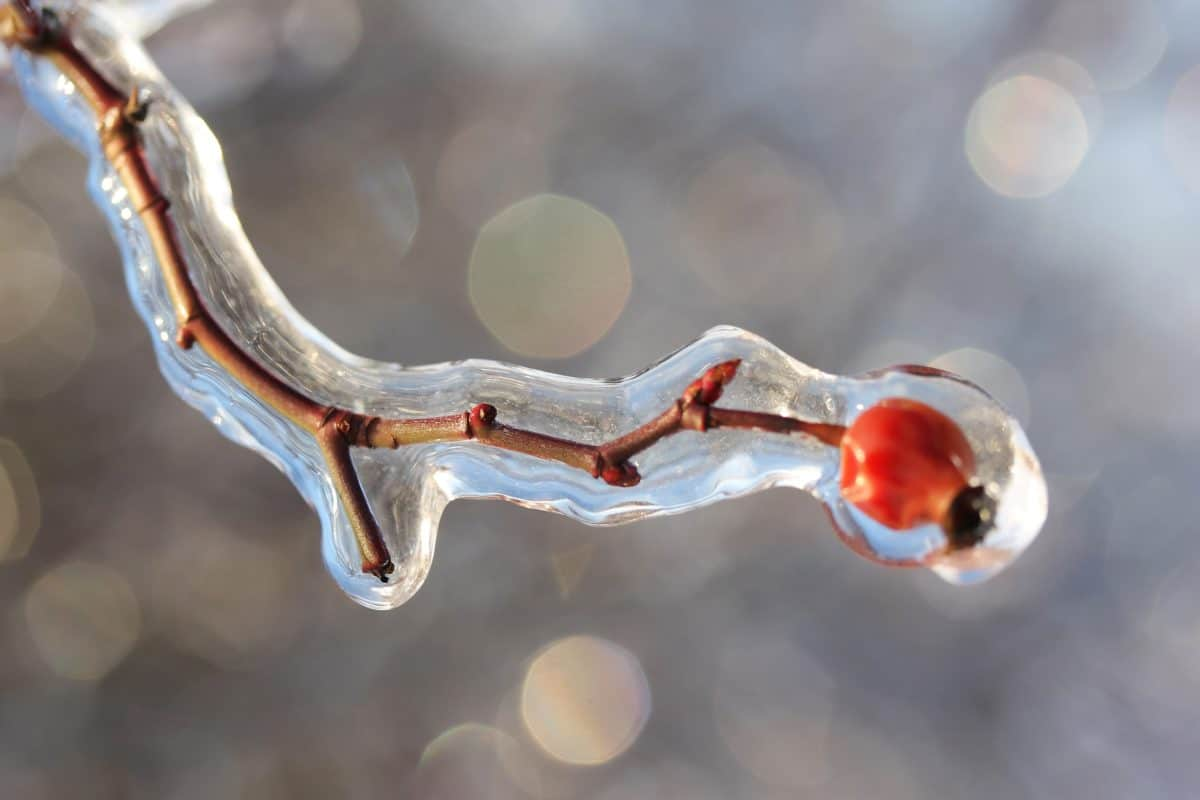 tree, frost, branch, cold, ice, winter, macro