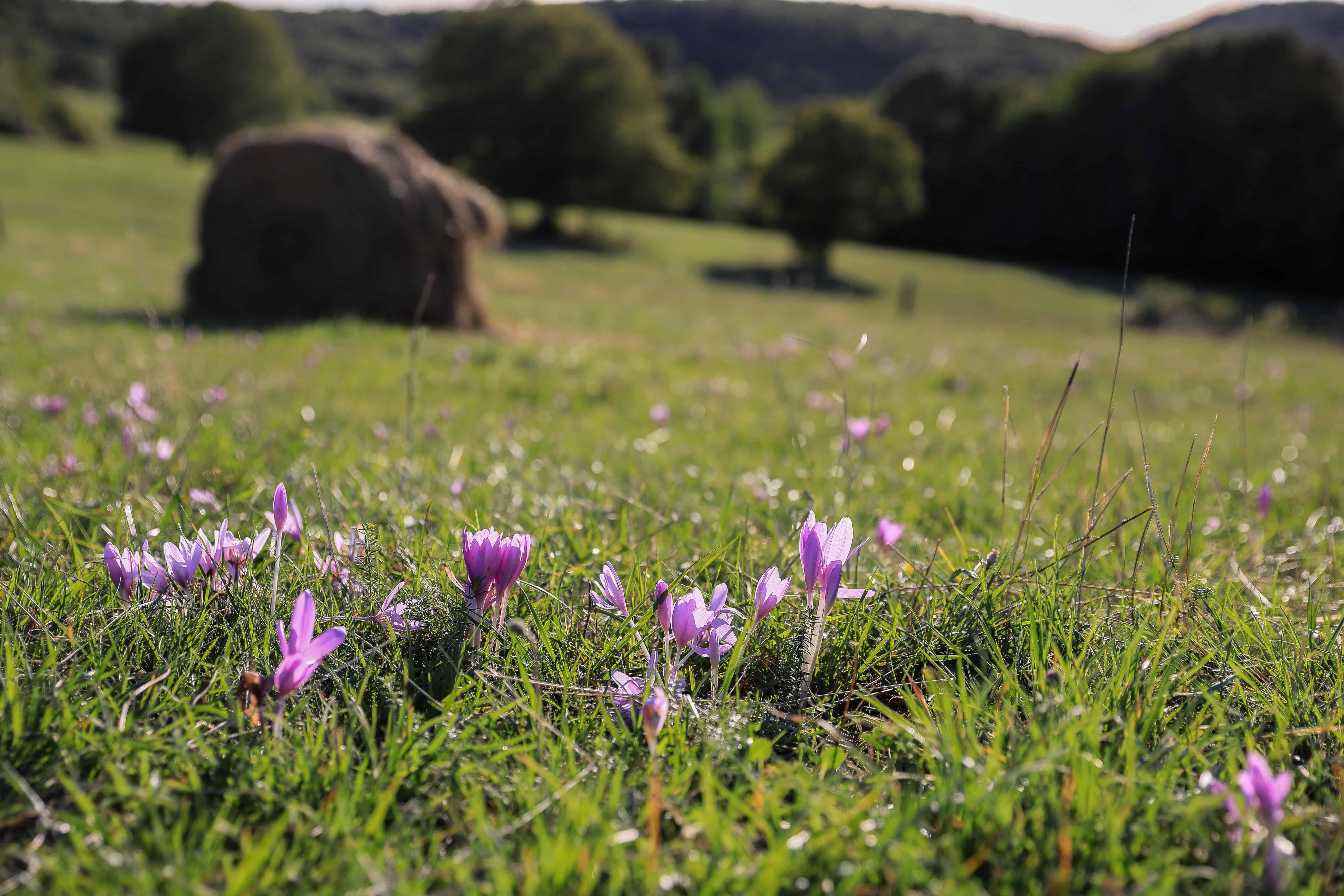 Flores Hermosas Flores Silvestres Fondos De Pantalla Gratis: Paisajes Naturales Flores Silvestres Fondos Pantalla Zen