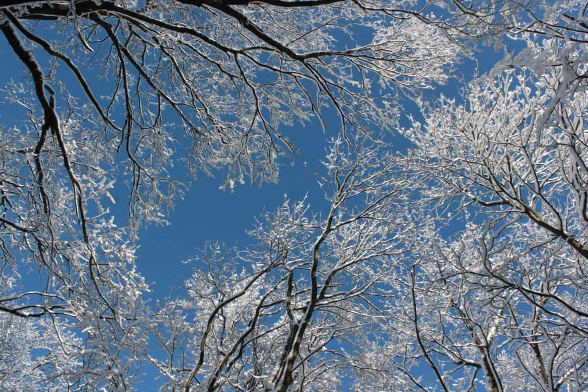 snow, branch, cold, winter, frost, tree, blue sky, wood, landscape