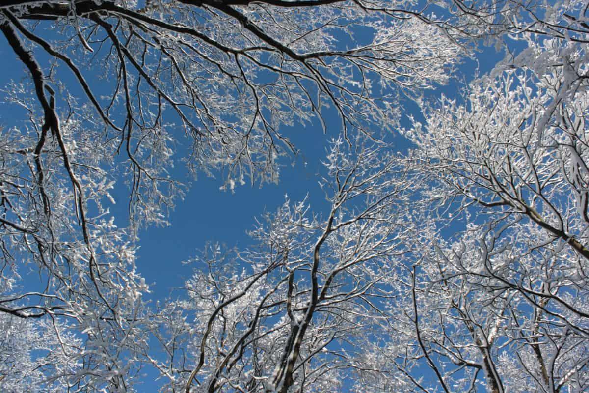 neige, branche, froid, hiver, givre, arbre, ciel bleu, bois, paysage