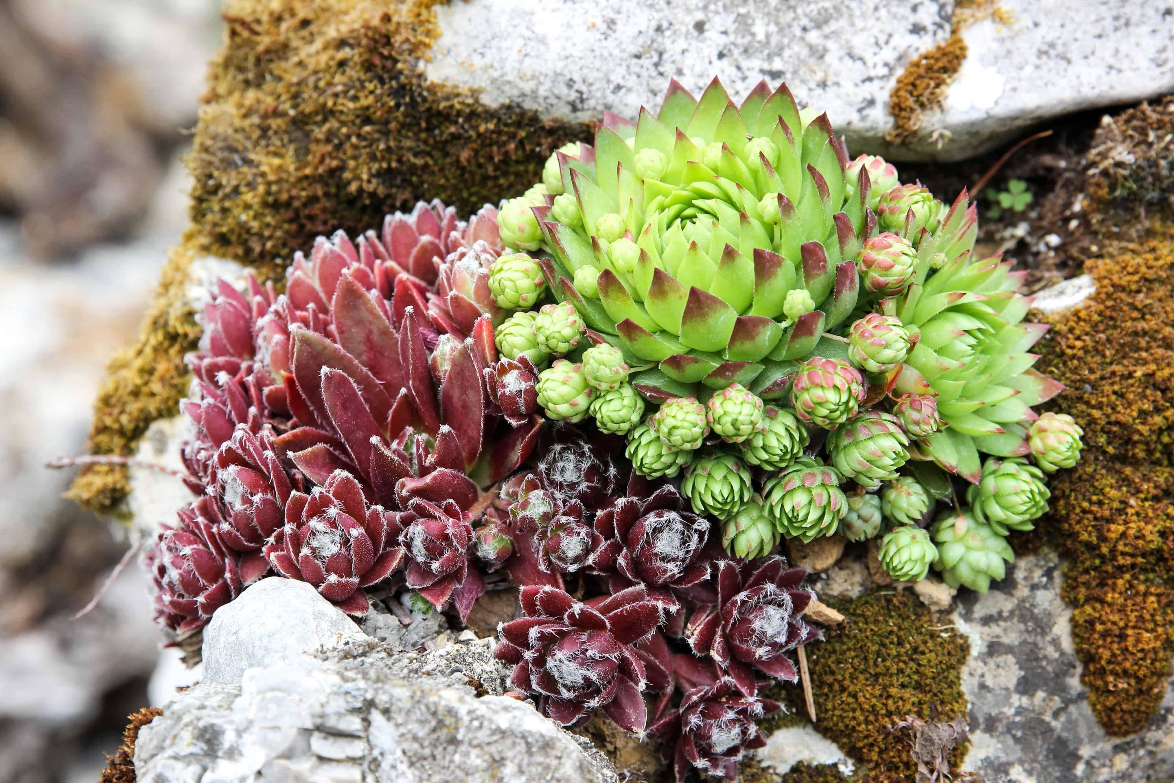 ... Nature, Garden, Wildflower, Flora, Leaf, Plant