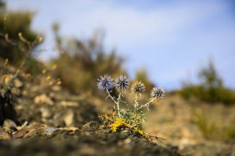 Wildflower, luce, natura, paesaggio, pianta, albero, cielo blu