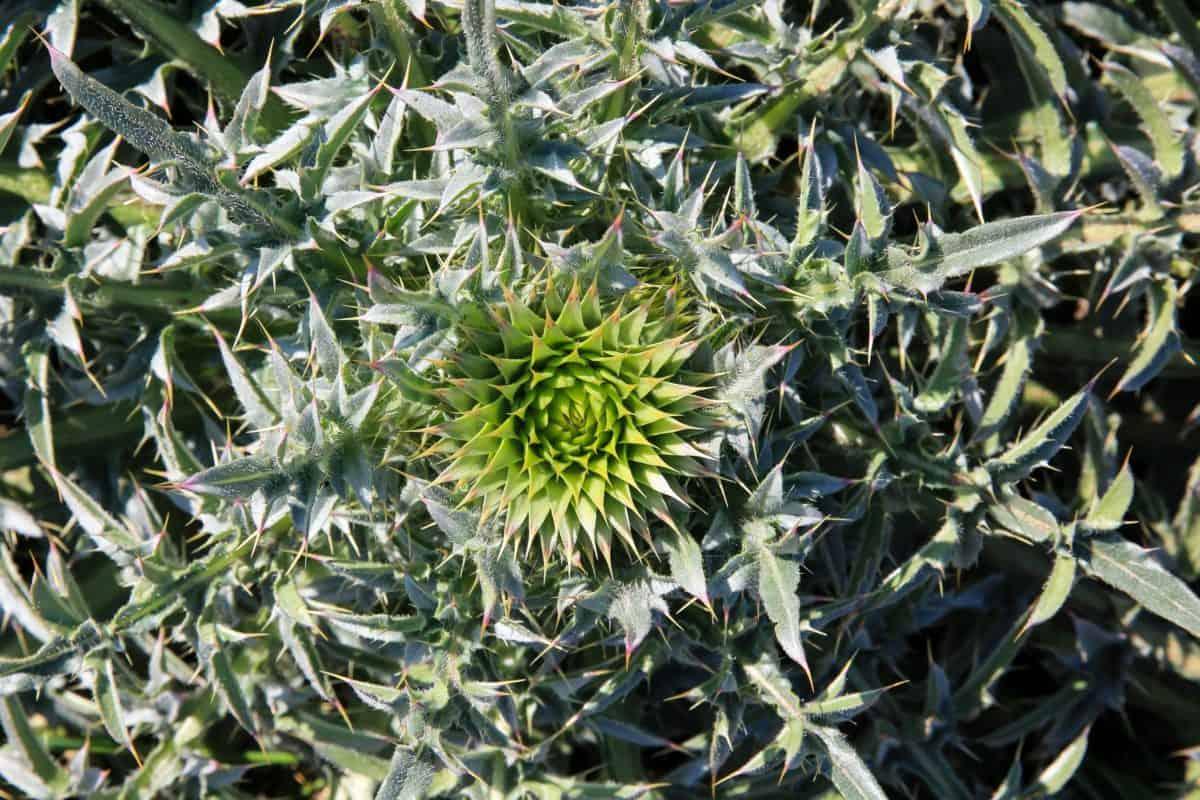 여름, 식물, 녹색 잎, 샤 프, 녹색, 식물, 자연