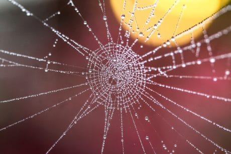 dew, trap, moisture, macro, detail, water, spiderweb, spider