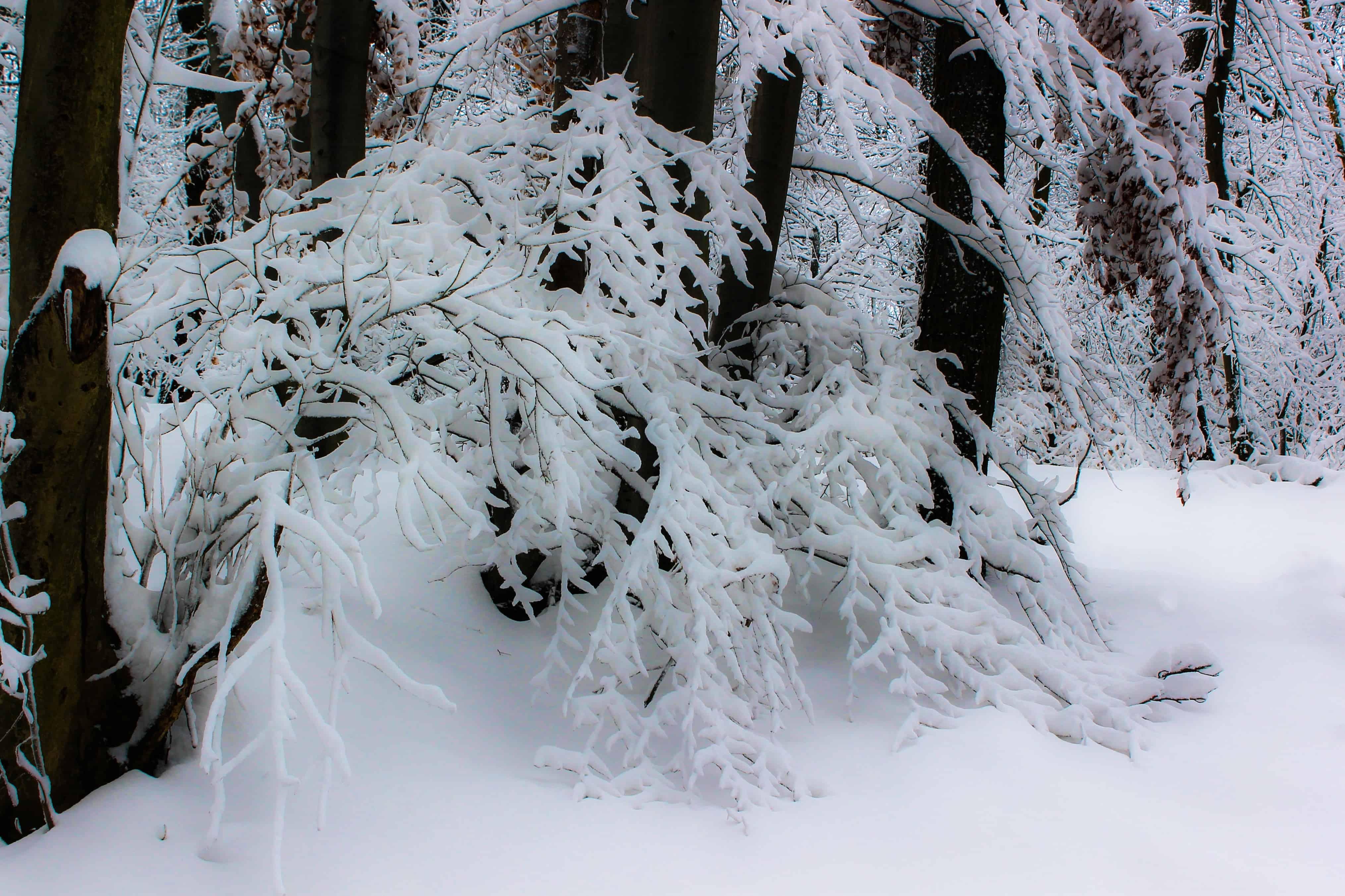 Картинка холод снег