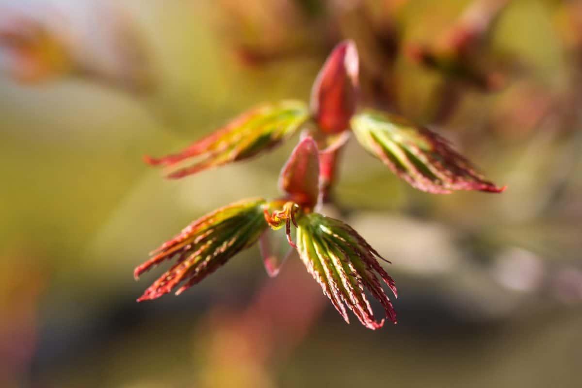 natura, foglia, pianta, fiore, giardino, autunno, macro
