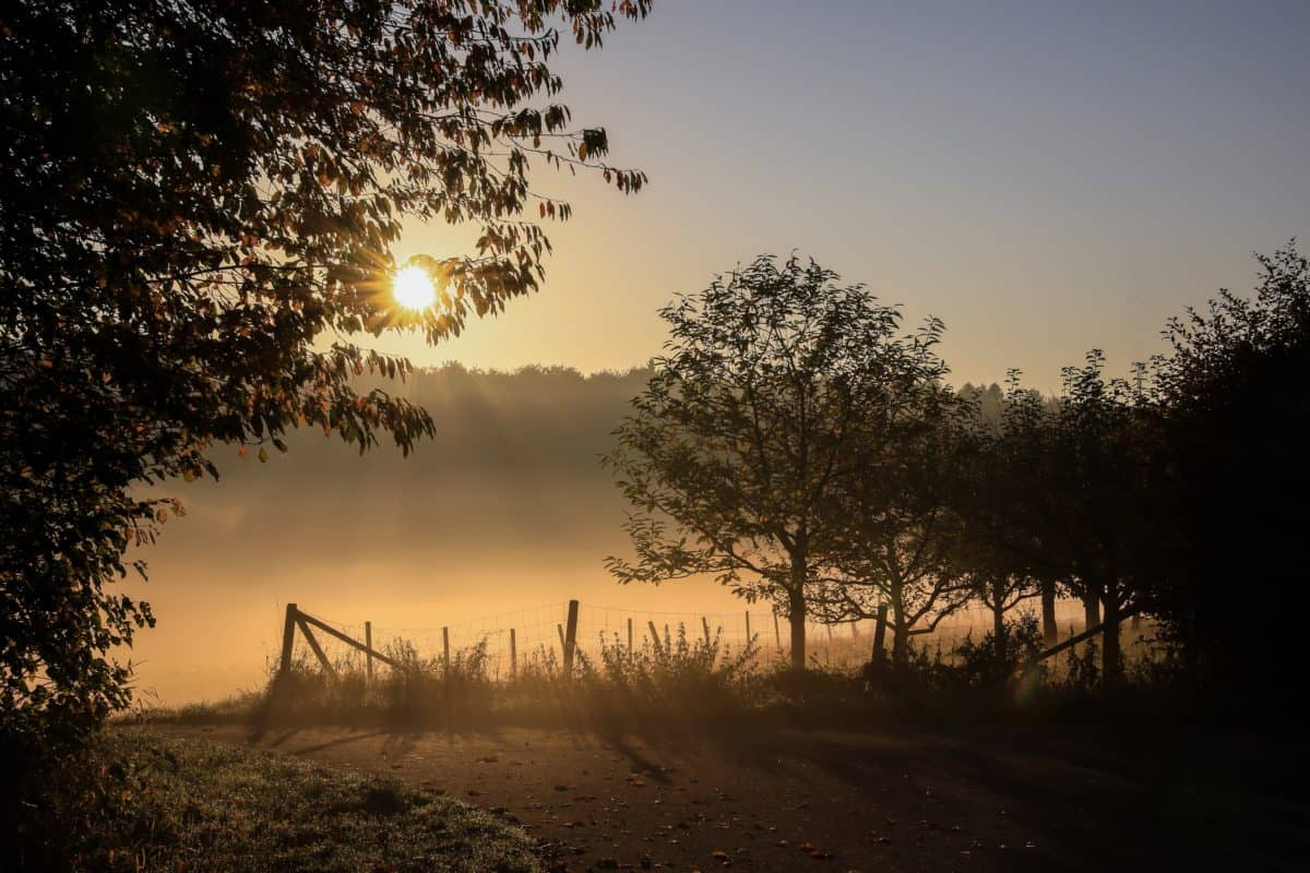 nature, fog, sunset, sky, landscape, tree, sun, outdoor