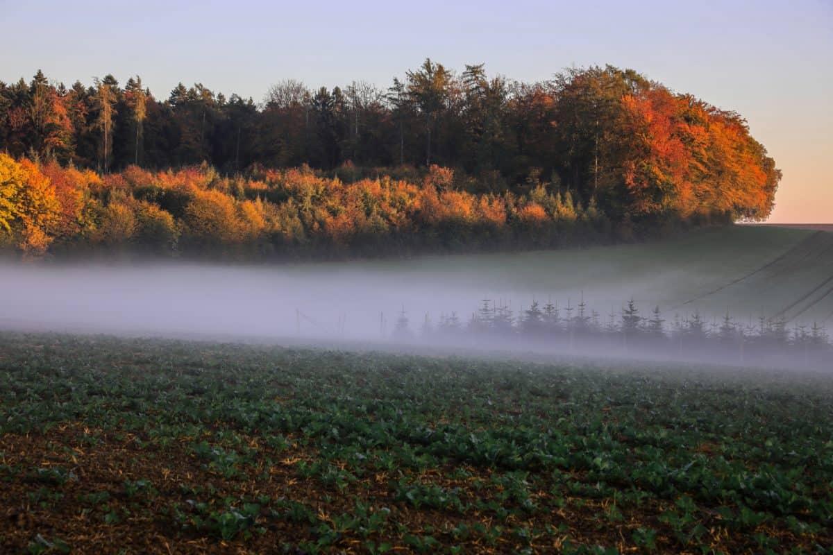 Jezioro, drzewa, woda, mgła, natura, mgła, krajobraz