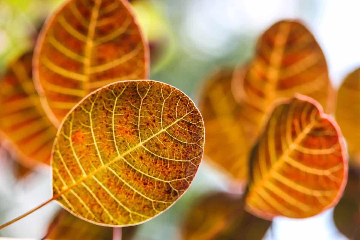 daun, alam, flora, tanaman, musim gugur, makro, rinci