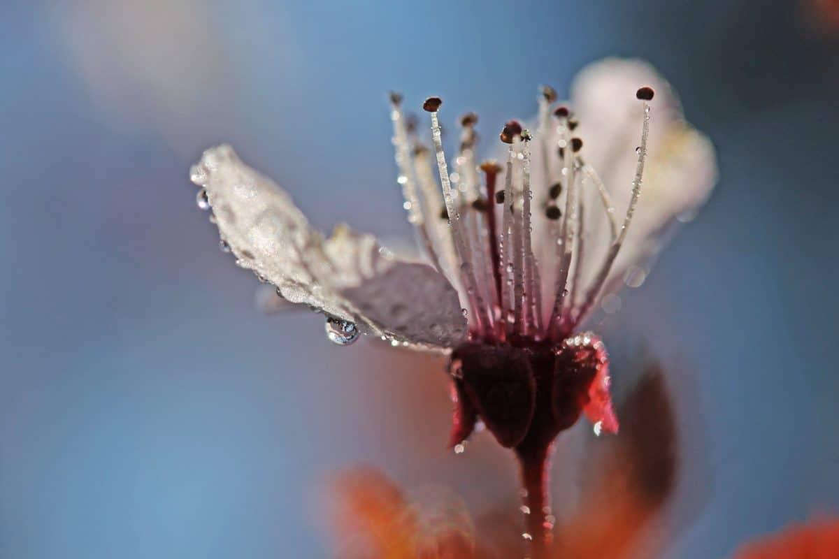 Wasser, Tau, Blume, Blütenblatt, Pflanze, Pflanzen, Pollen, frost