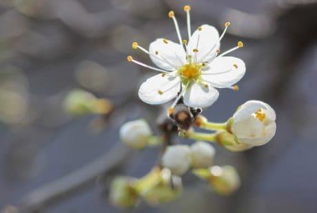 nature, fleur, plante, fleur, jardin, fleur, pétale