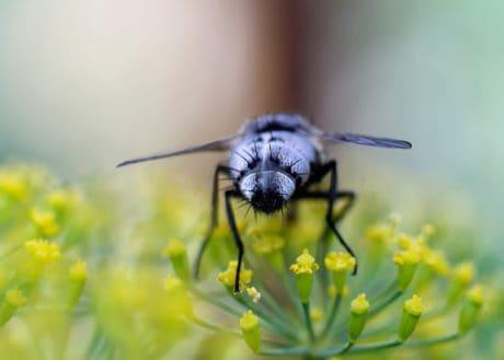 insect, natuur, bloem, ongewervelden, plant, macro, detail, daglicht