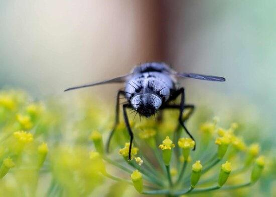 insecto, naturaleza, flores, invertebrados, planta, macro, detalle, luz del día