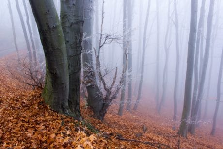 wood, fog, landscape, nature, mist, dawn, leaf, tree, forest