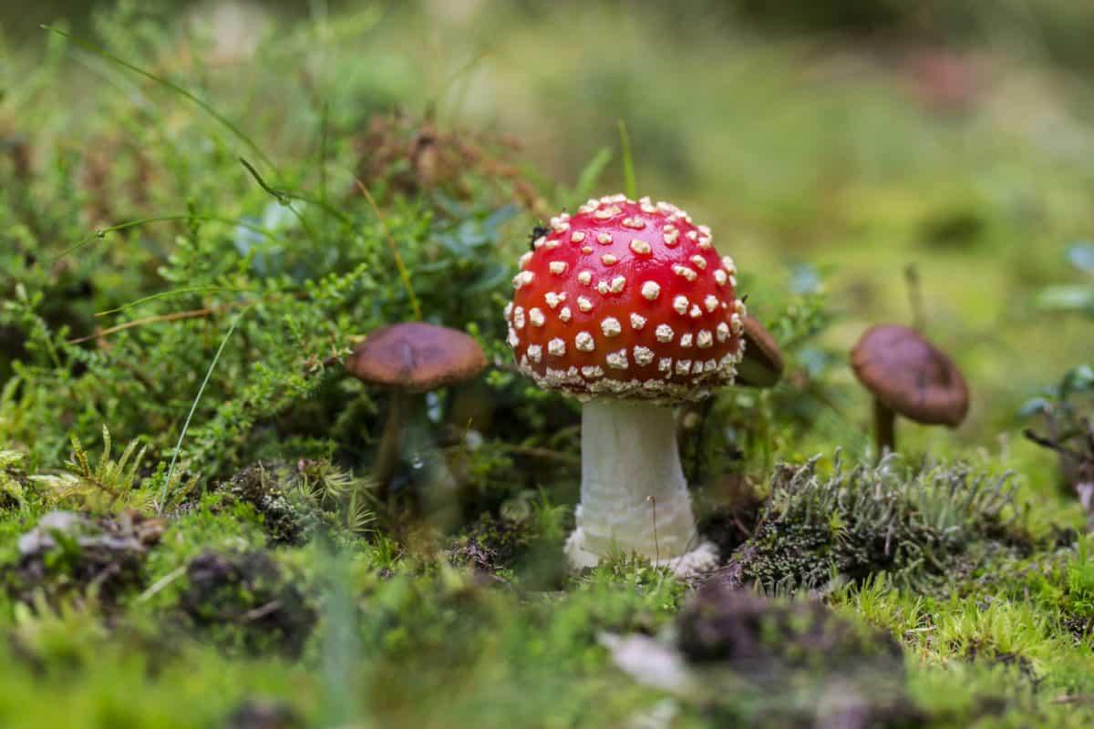 champignon, sauvage, herbe, nature, organisme, champignon, mousse
