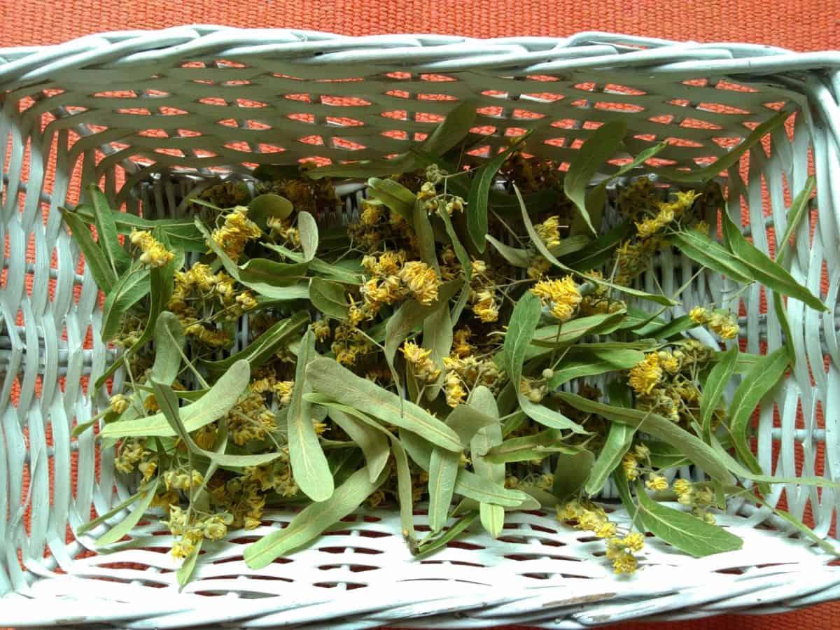 alimentos, flora, flores, cesta de mimbre, hierba