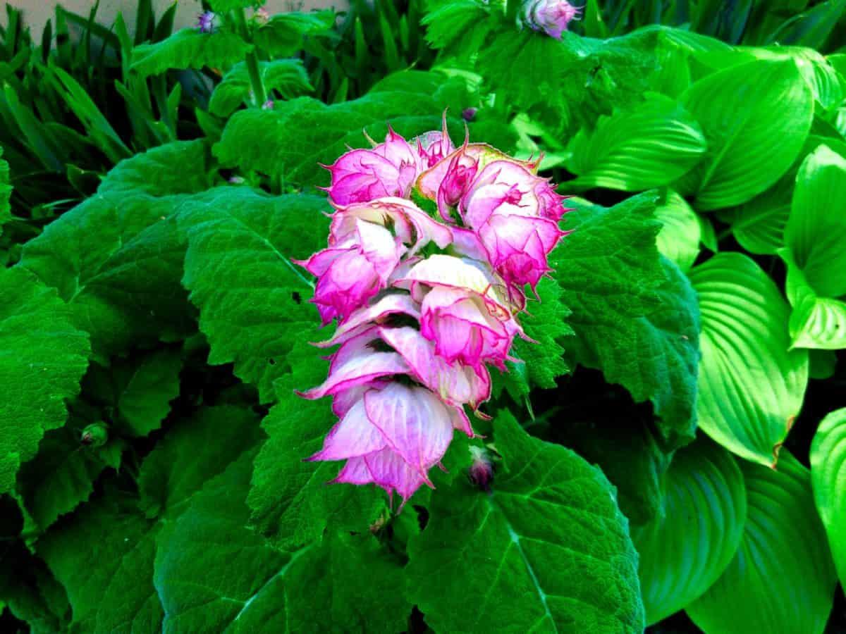 Garten, Blatt, Natur, Sommer, Blume, Flora, Pflanze, Kraut