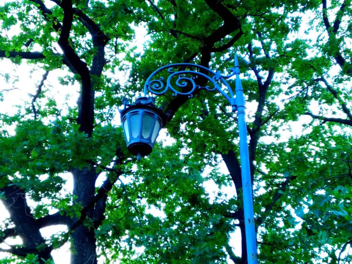 lampe de rue, objet, métal, fonte, fer, arbre, bois, feuilles, nature, plein air