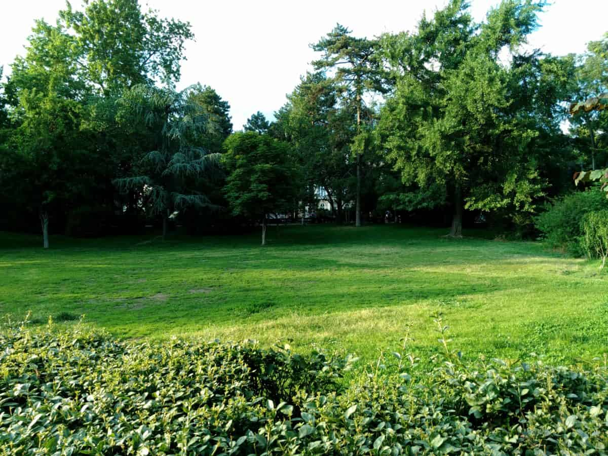 environment, garden, leaf, landscape, tree, grass, flora, nature, summer