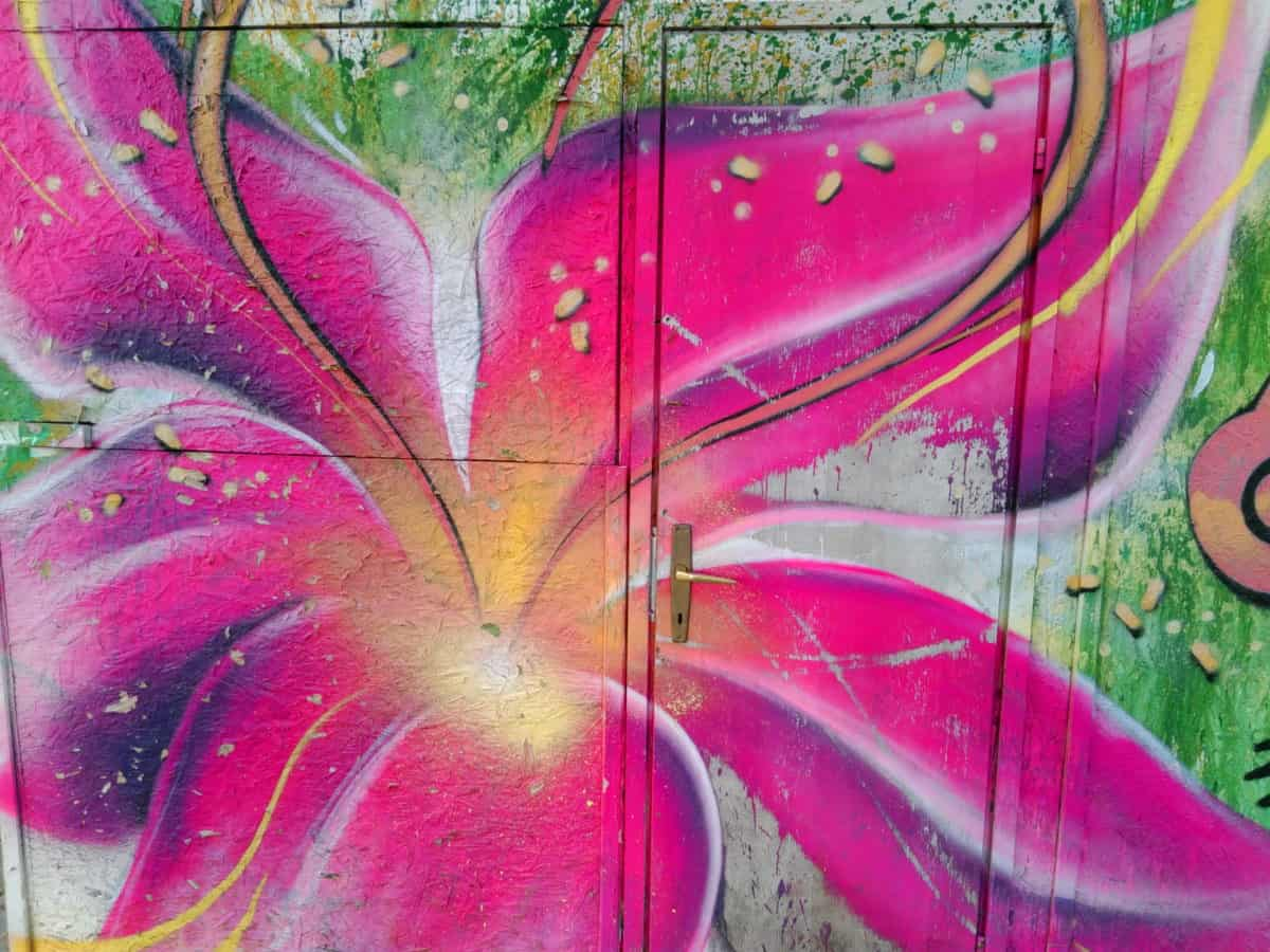 graffiti, door, colorful, nature, flower, plant, herb