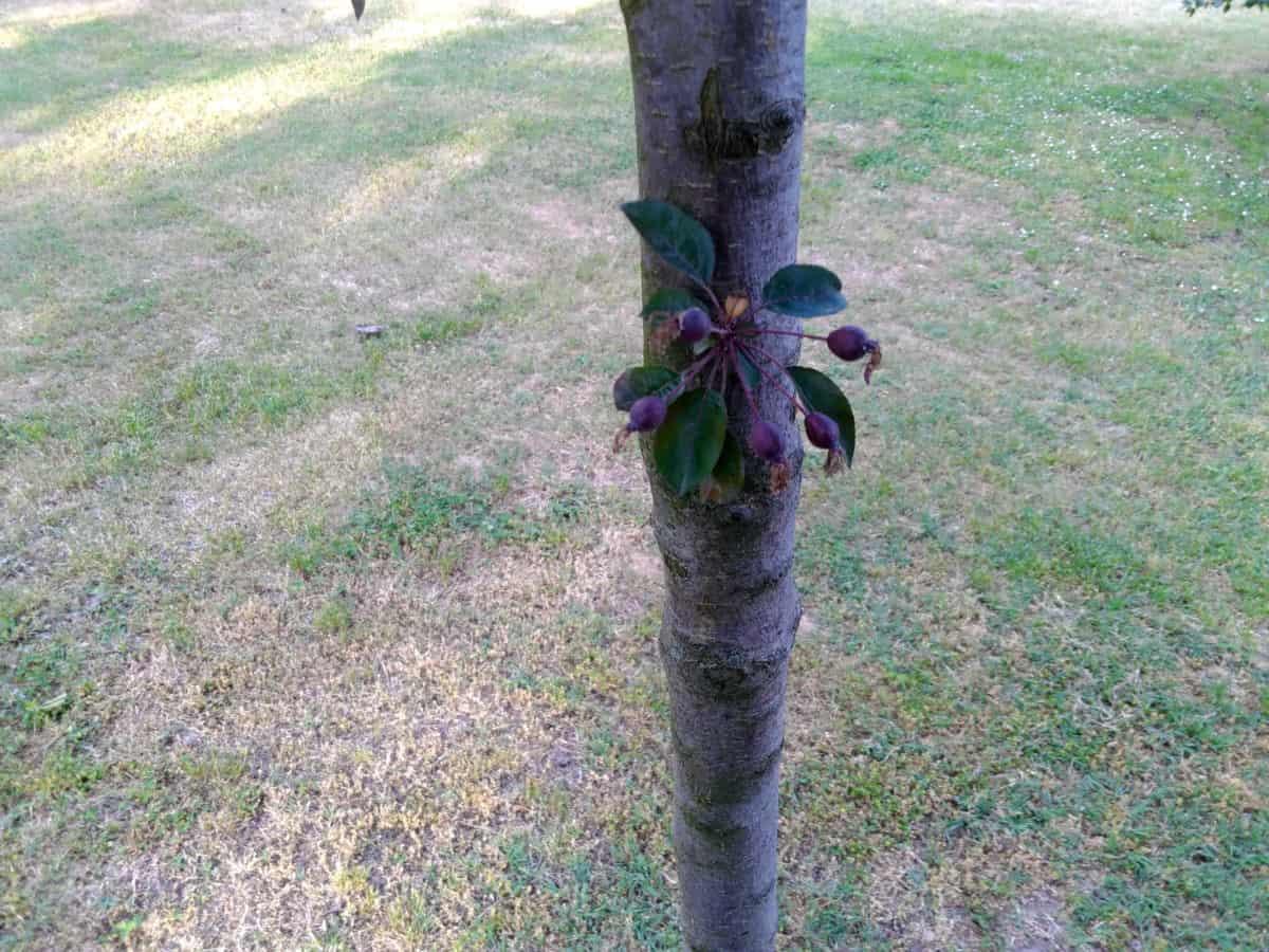 Baum, Pflanzen, Rasen, Garten, Sommer, Natur, outdoor
