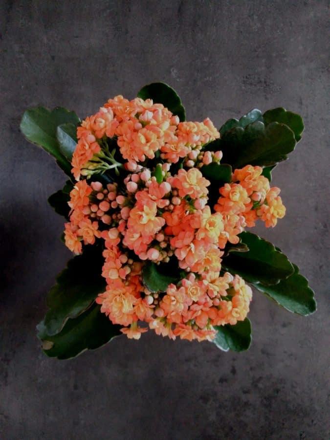 bukett, orange blomma, blad, växt, dekoration, kronblad, pistill