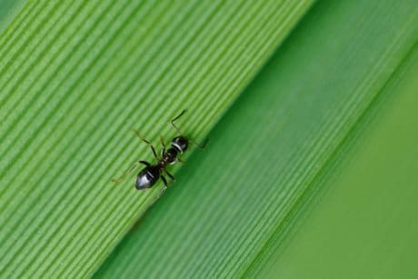 ant, green leaf, insect, nature, arthropod, invertebrate, bug