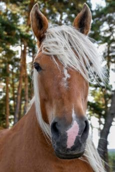 animal, horse, nature, portrait, wood, head