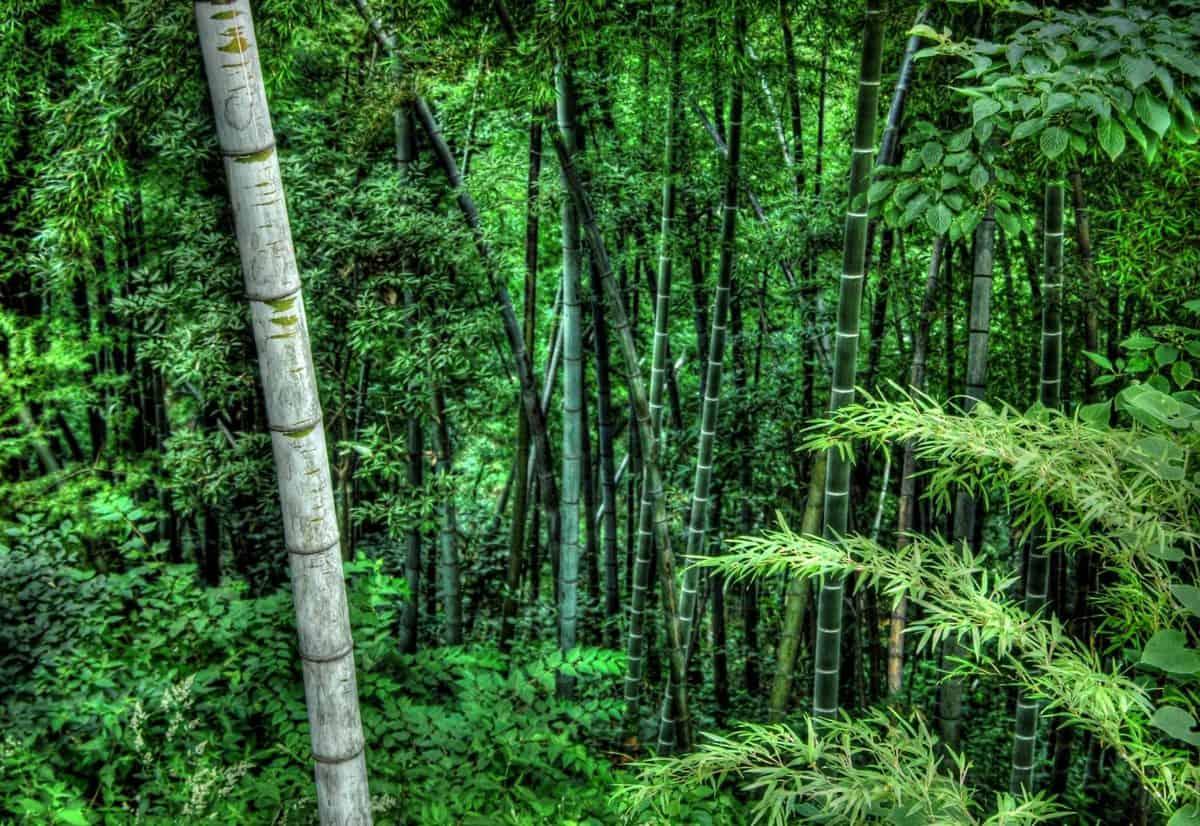 forêt tropicale humide, flore, environnement, paysage, arbre, feuille, nature, plante