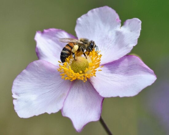 pollen, bee, pollination, nature, insect, flower, plant