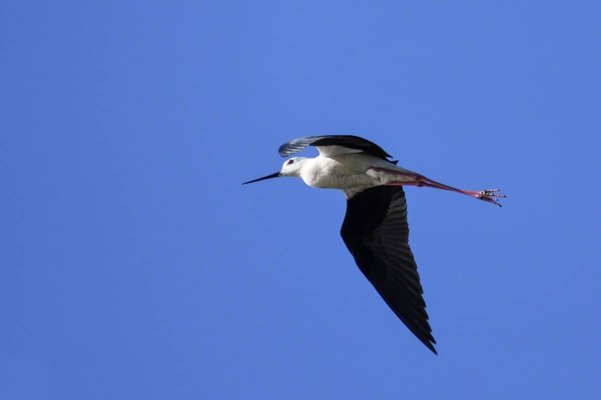 диви животни, птици, Открит, животински, синьо небе, клюн, полет
