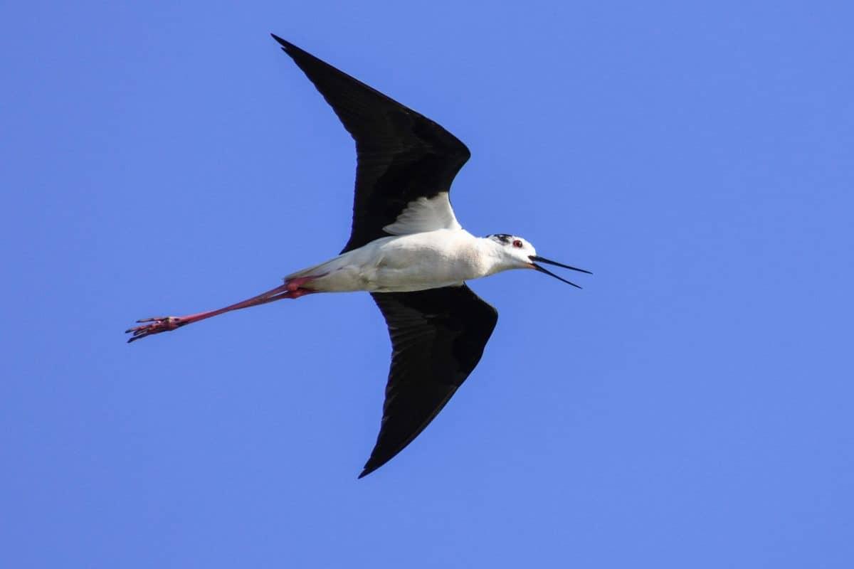 Natur, Vogel, Wildlife, blauer Himmel, Tier, im freien